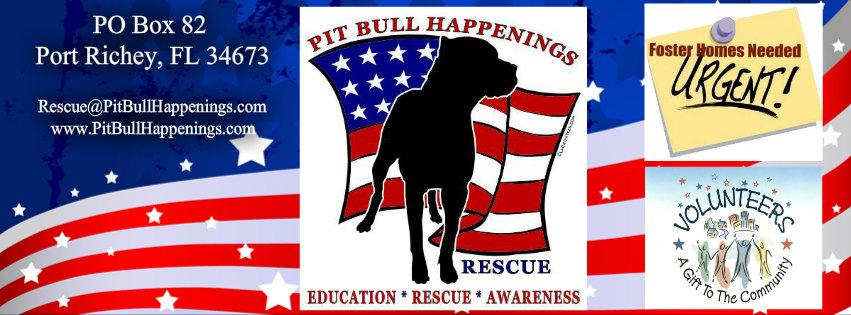 Pit Bull Happenings